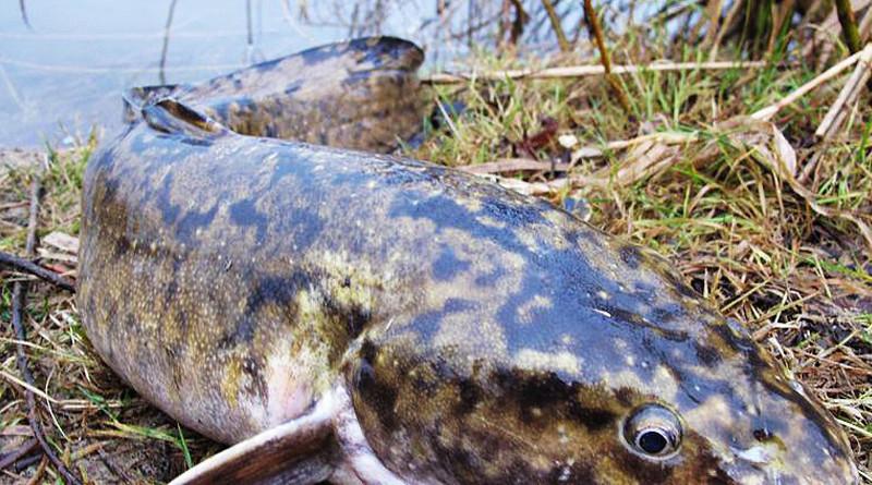 Секреты рыбалки на сайте http://rybolovnye-sekrety.ru