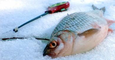 ловля крупной плотвы со льда