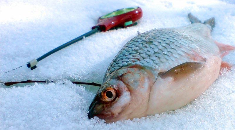 Ловля плотвы зимой Несколько полезных советов