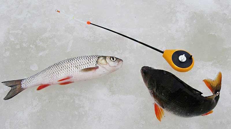 Зимняя рыбалка на голавля