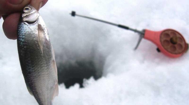 ловля уклейки на мормышку со льда