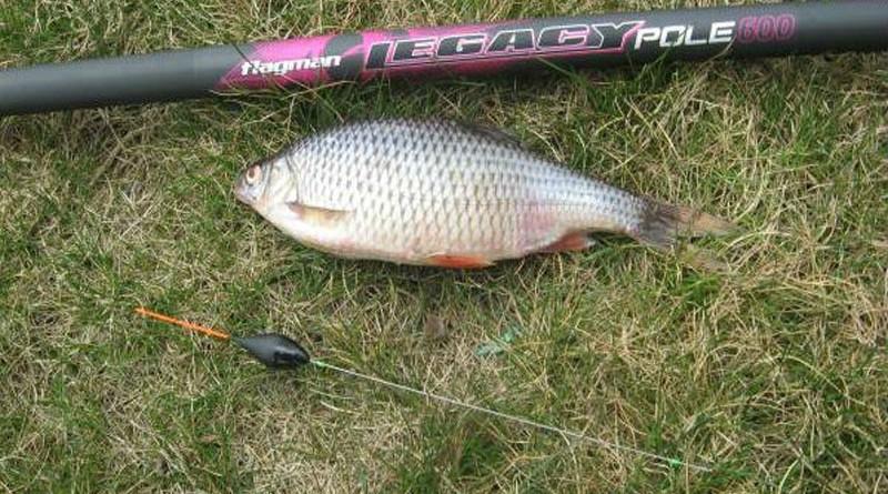 рыбалка плотвы поплавочной снастью