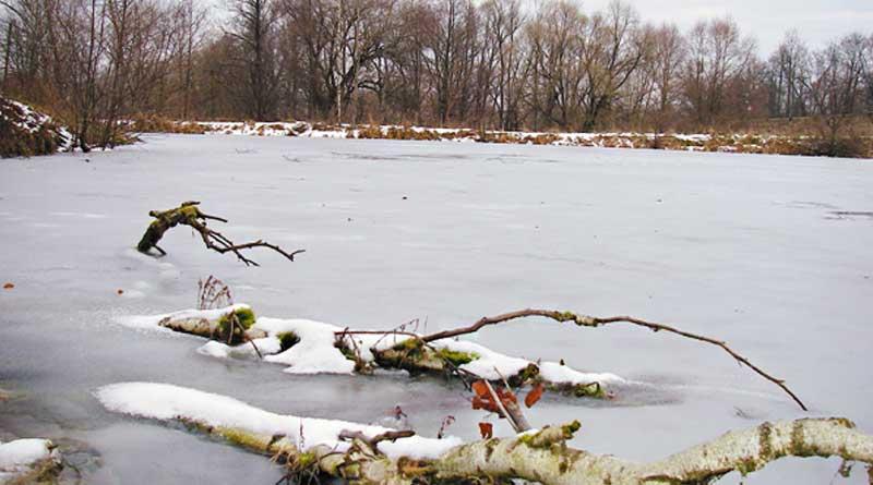 Коряжник на поверхности льда