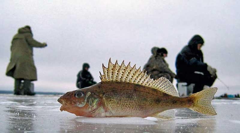 Ловля ерша со льда