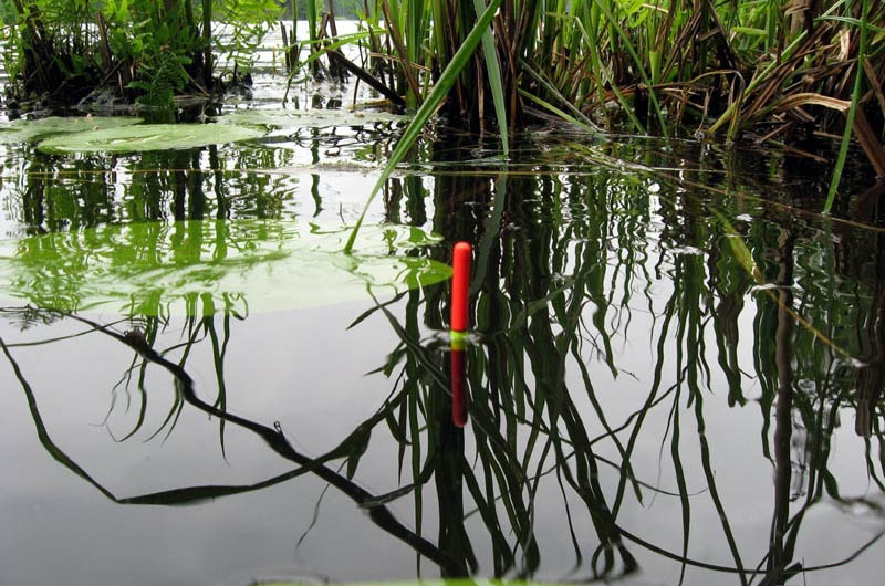 Клёв карася на болоте весной