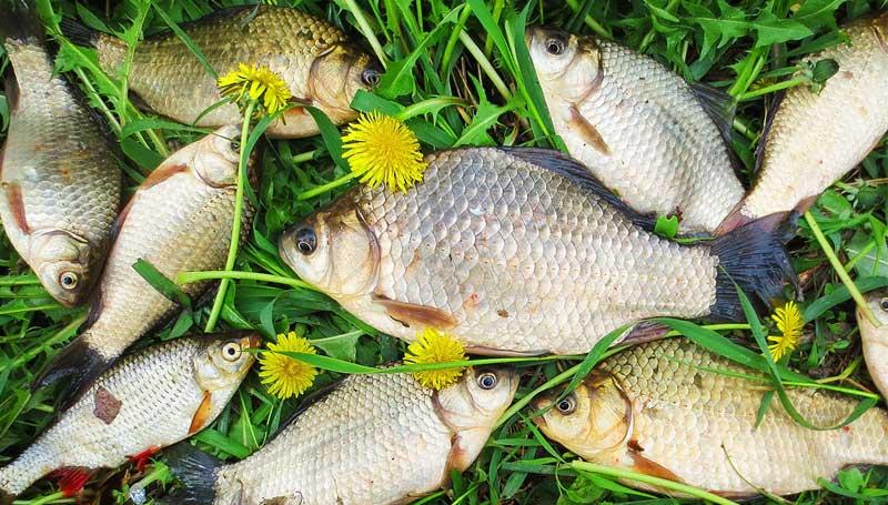 когда в мае можно ловить рыбу