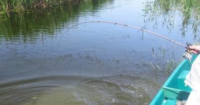 ловля в мутной воде