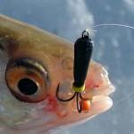 рыбалка на чертик