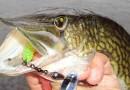 Рыбалка на щуку в разное время года