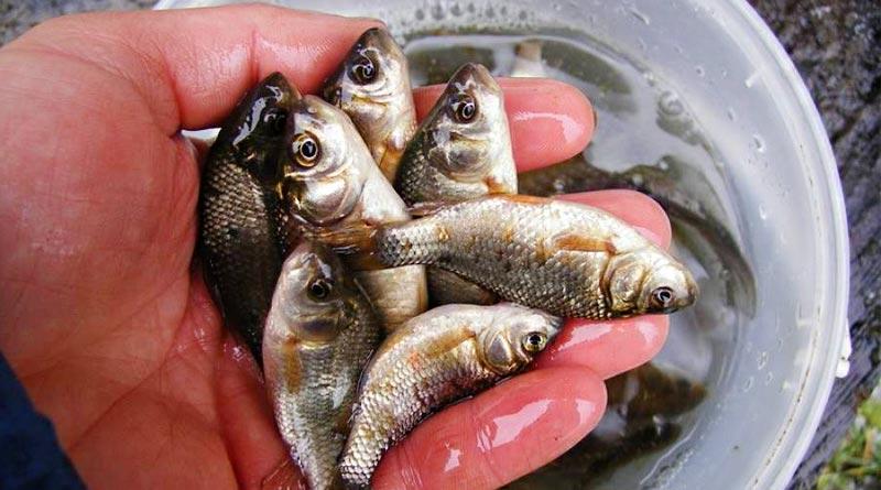живец для рыбалки ростов