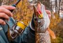 Рыбалка на щуку в октябре