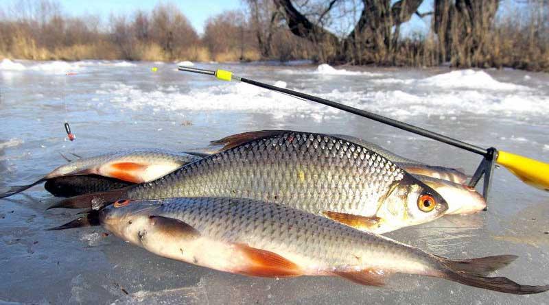 Ловля зимней плотвы с прикормкой