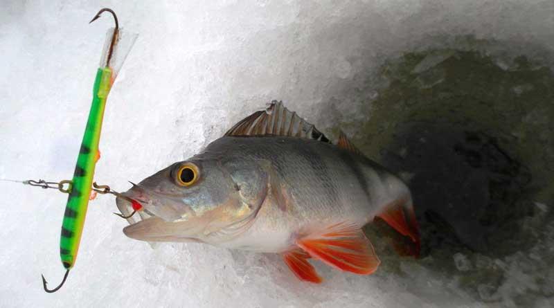 Балансиры для зимней рыбалки — виды и особенности применения