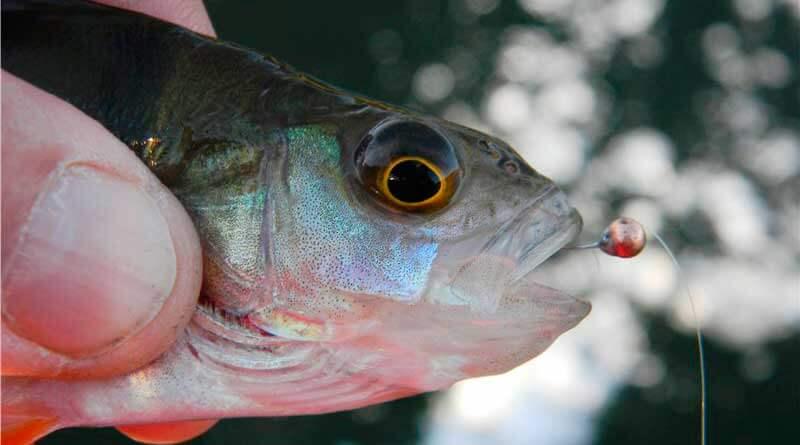 Рыбалка на мормышку поздней осенью