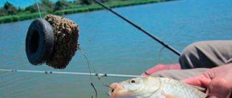 Ловля рыбы на жмых