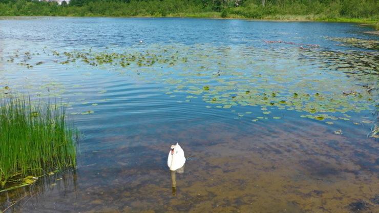 Озеро Петушиное в городе Каменногорск
