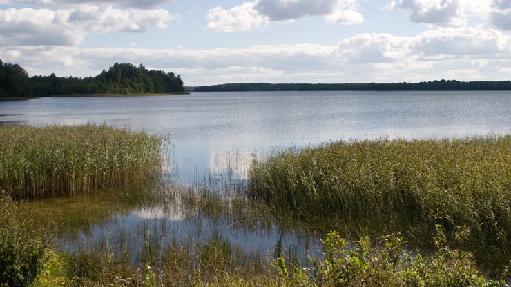 Озеро Ворохобское в Великолукском районе