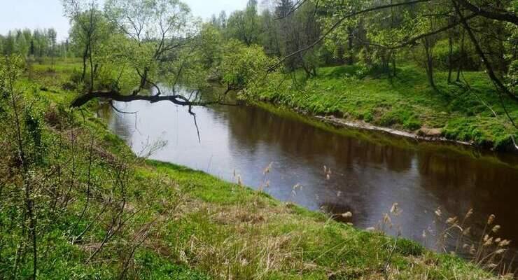 Река Дубна в деревне Большое Страшево
