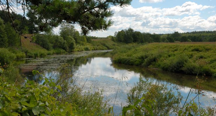 Река Шоша в деревне Речки