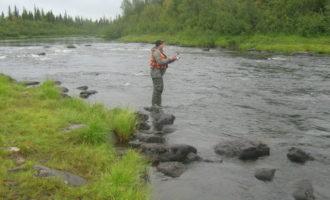 Река Курга в Мурманской области