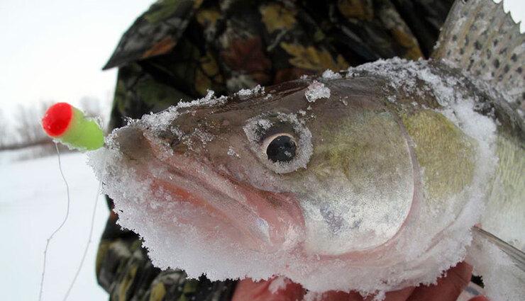 Ловля судака на мормышку со льда