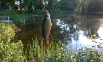 Ловля рыбы на карьерах весной
