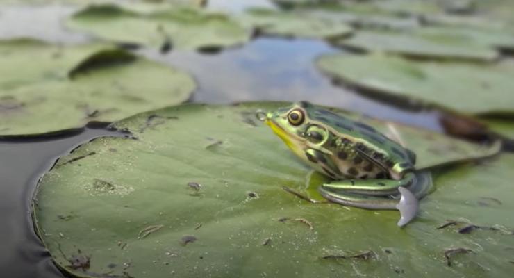 Приманка Wobbler Frog