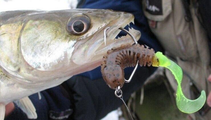 Ловля судака на отводной поводок